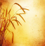 Wheat. Beautiful old-styled Wheat Border.With copy space royalty free stock photos