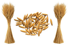Wheat. Illustration art of wheat with isolated background Royalty Free Stock Photos