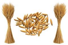 Wheat. Illustration art of wheat with isolated background stock illustration