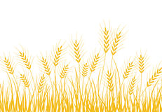 Wheat. Drawing of golden wheat in a white background Stock Photos