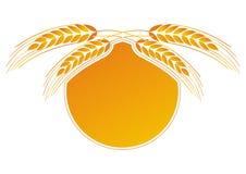 Wheat - stock photography