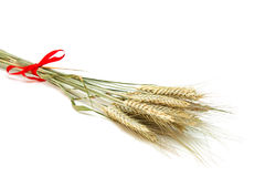 Wheat. Ears lie on a light background Royalty Free Stock Photo