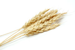 Wheat. Wheat over a white background royalty free stock photos