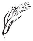 Wheat. Monochrome illustration of ear of wheat Stock Photos