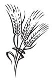 Wheat vector illustration