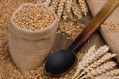 Wheat. In small burlap sack Stock Photos
