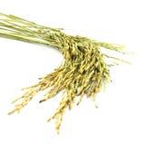 Wheat. Isolated on white background Stock Photography
