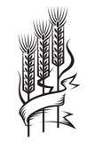 Wheat. Monochrome illustration of ears of wheat Stock Image