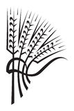 Wheat. Monochrome illustration of wheat ears Royalty Free Stock Photos