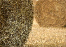 Wheat. Harvested Wheat Royalty Free Stock Photos