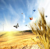 Wheat. With butterfly and ladybug Stock Photography
