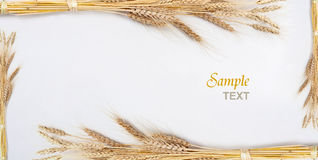 Wheat. Isolated on white with text Stock Photography