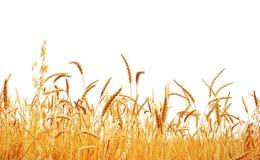 Free Wheat Stock Photography - 23154052