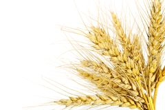 The wheat Royalty Free Stock Photos