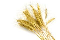 Wheat. Isolated on white background Stock Photo