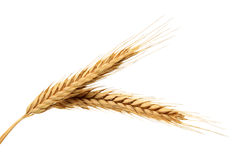 Free Wheat Stock Photos - 25357363