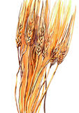 Wheat. Painting of the golden spikelets of wheat Stock Photography