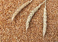 Wheat 26. Wheat background in close up Royalty Free Stock Photos