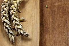 Free Wheat Stock Photos - 27008433
