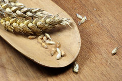 Wheat. Grains on a wooden table royalty free stock photos