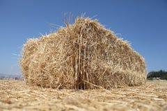 Wheat. Bundle of wheat on a farm Stock Photo