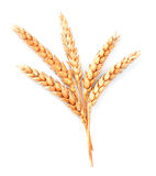 Wheat  Stock Photos