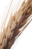 Wheat 3 stock photo