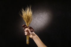 Wheat royalty free stock images