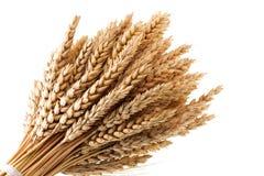 Wheat. Close up of wheat stalk Royalty Free Stock Photo