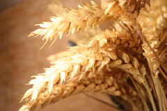 Free Wheat Royalty Free Stock Images - 419579