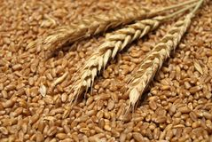 Wheat. Background in close up Royalty Free Stock Images