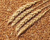 Wheat. Background in close up Stock Photos