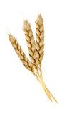 Wheat Stock Photography