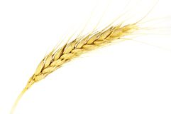 Free Wheat Stock Photos - 6004143
