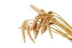Free Wheat Stock Photo - 6423170