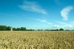 Wheat abundance. Landscape of a field full of wheat against a wind-swept sky Stock Image