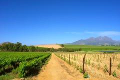 Wheat And Grape Fields Stock Photo
