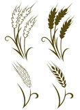 Wheat And Rye Stock Image