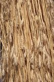 Wheat background. Yellow ears of wheat close up Royalty Free Stock Photos