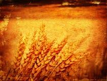 Wheat background Royalty Free Stock Photos