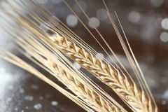 Wheat background Stock Photography