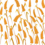 Wheat background. Isolated and grouped objects over white Royalty Free Stock Image