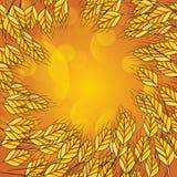 Wheat background. Vector illustration. Wheat golden background Stock Image
