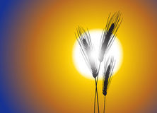 Wheat background. Wheat on a great summer sunset background Royalty Free Stock Image