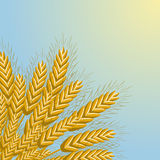 Wheat background. The concept of agriculture Stock Image