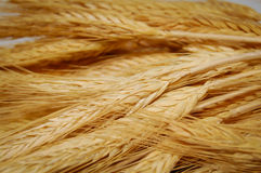 Wheat background. Ears of wheat closeup background Stock Photo