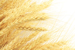 Wheat in the background Stock Photography