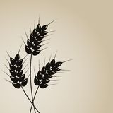 Wheat background. Abstract wheat background. This is file of EPS10 format Stock Photos