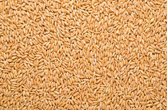 Wheat background. View from the top Stock Photo