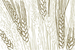 Wheat background. For all design conditions Stock Image